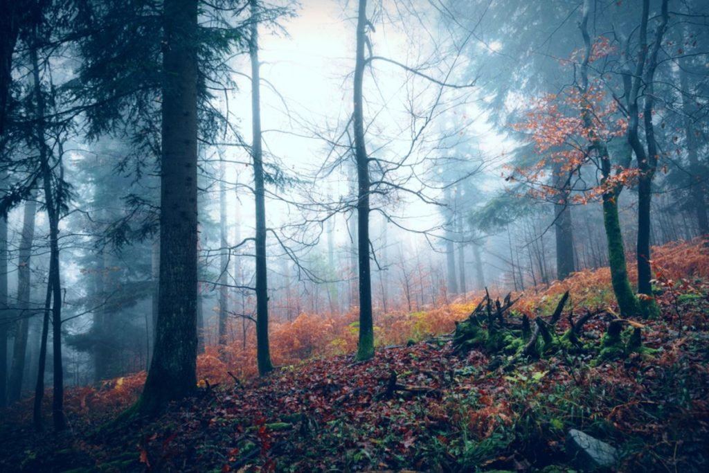Dark scary foggy autumn season wood landscape