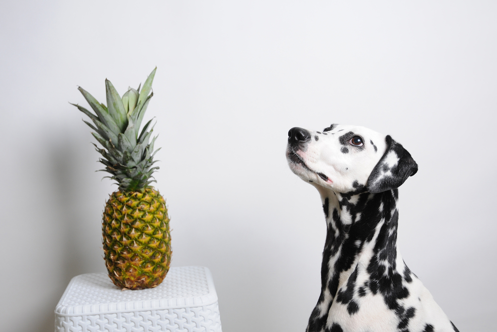 Dog dalmatian and pineapple on a white background