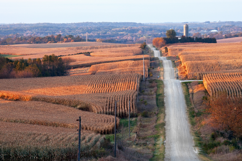 Rural landscape with corn fields, rolling hills, and a gravel road