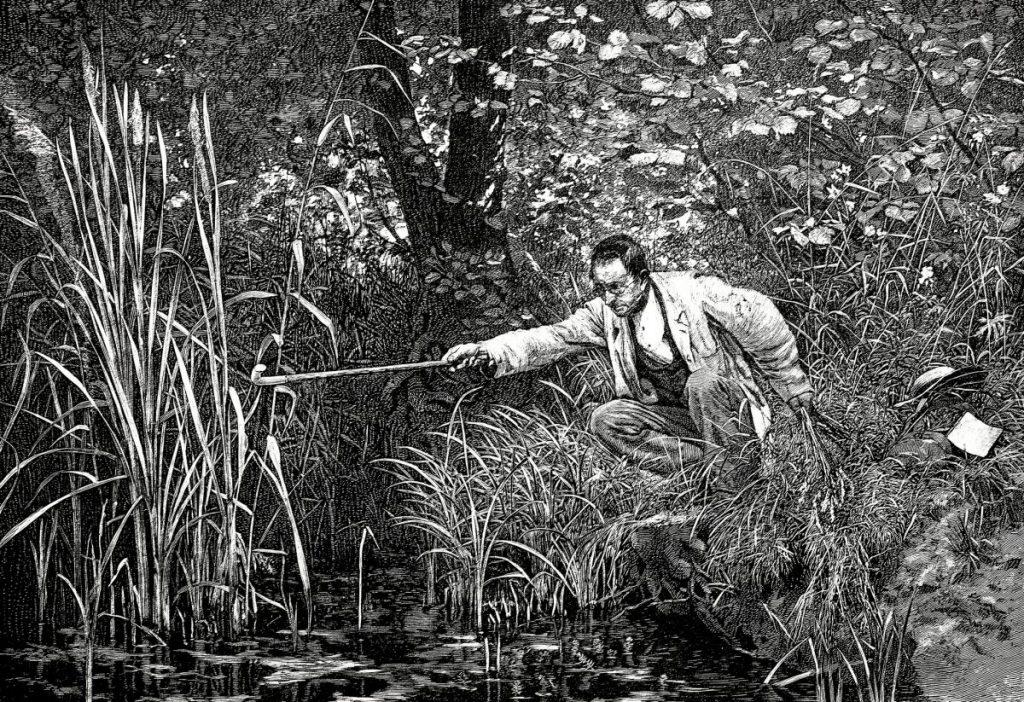 19th century botanist working