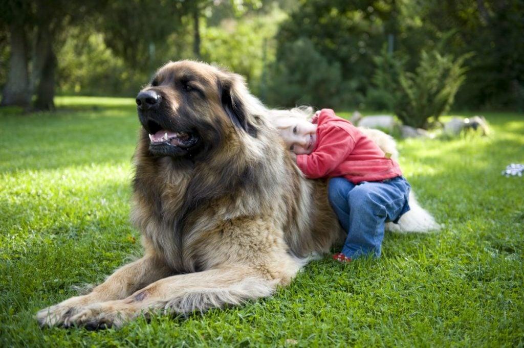 gentle intelligent family pet children