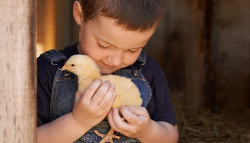 small boy holding chick