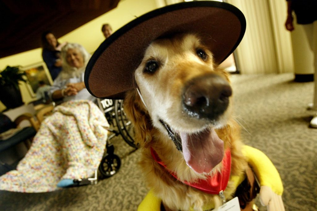 therapy dog nursing home