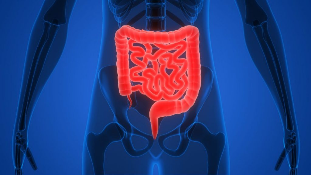 Appendix Appendicitis Colon