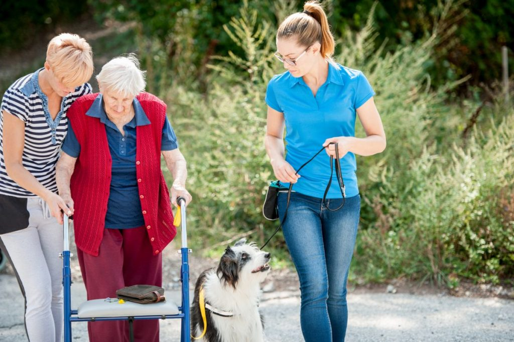 assisted animal therapy