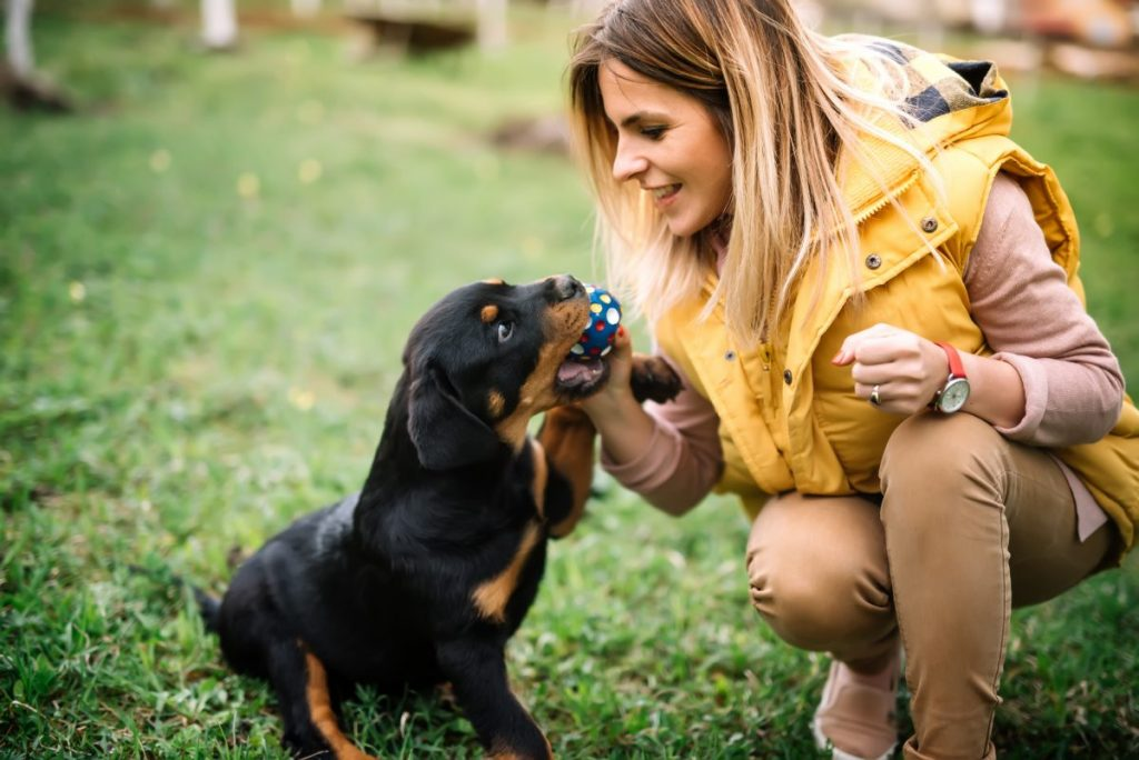 temperaments of rottweilers