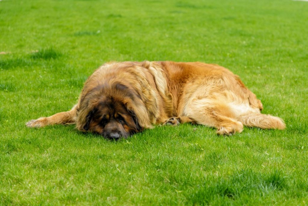 pet therapy dog care homes