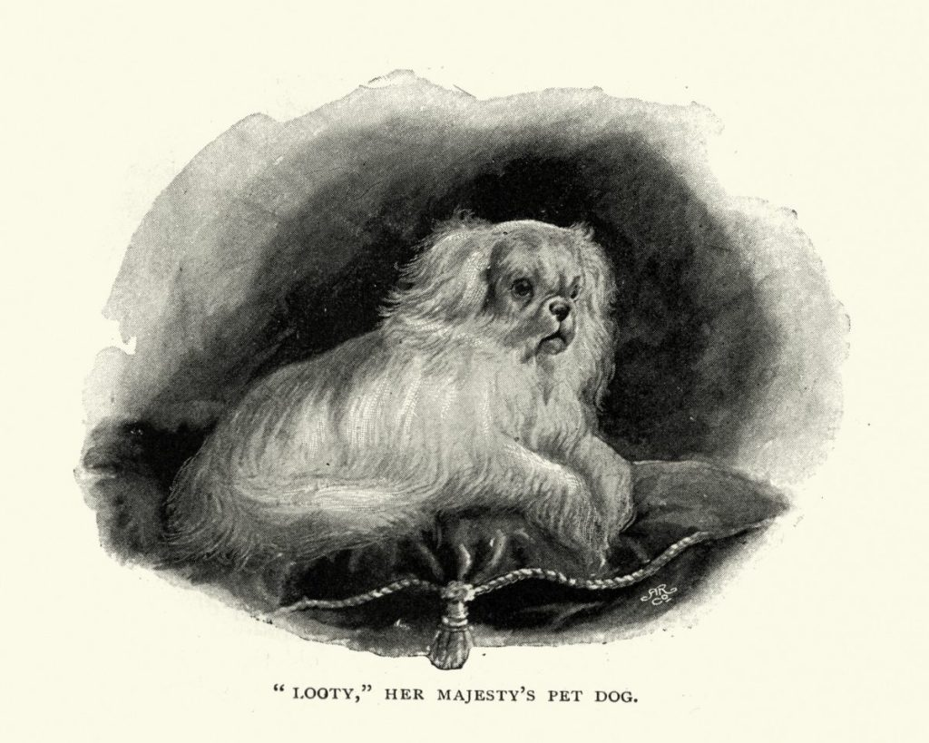 history of the teacup pomeranian