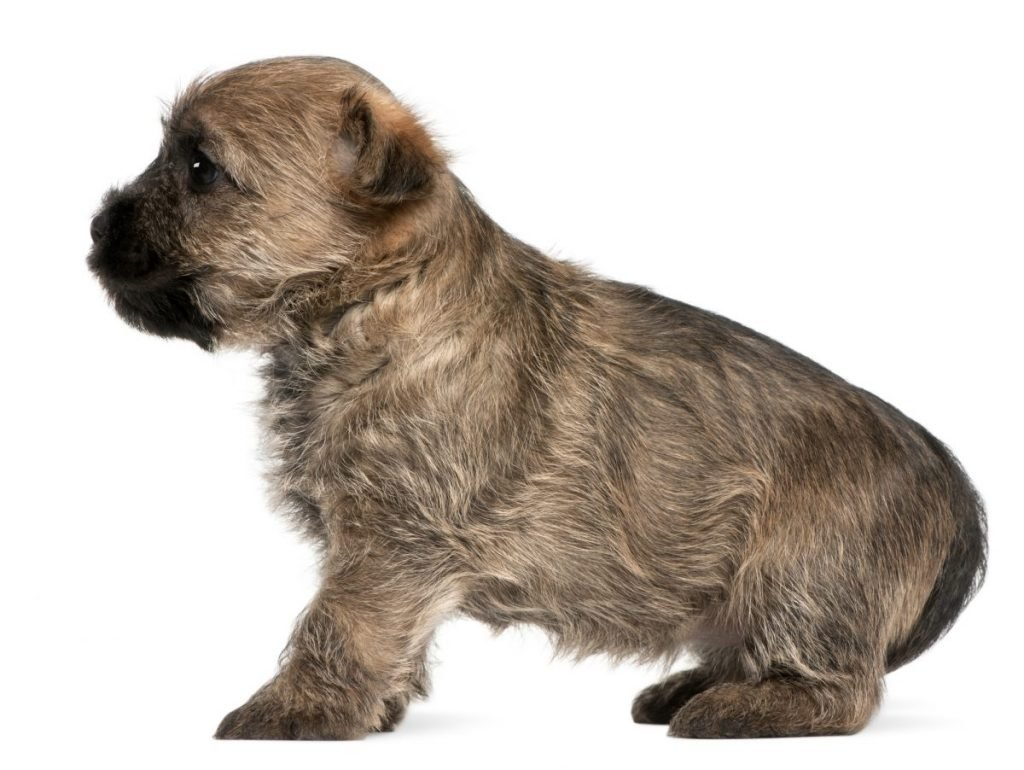 Puppies affected by enlarged bones