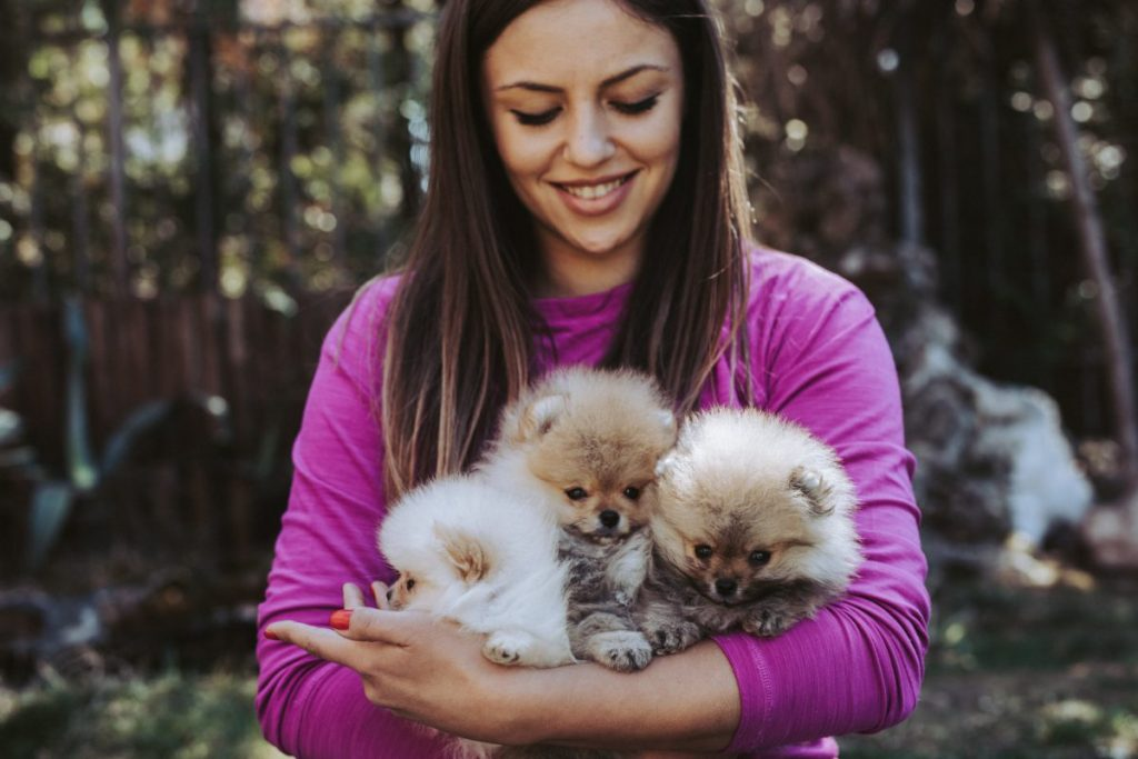 behavior and personality of teacup pomeranian