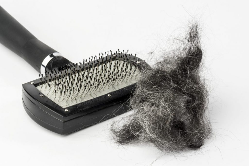 brushing shed dog hair