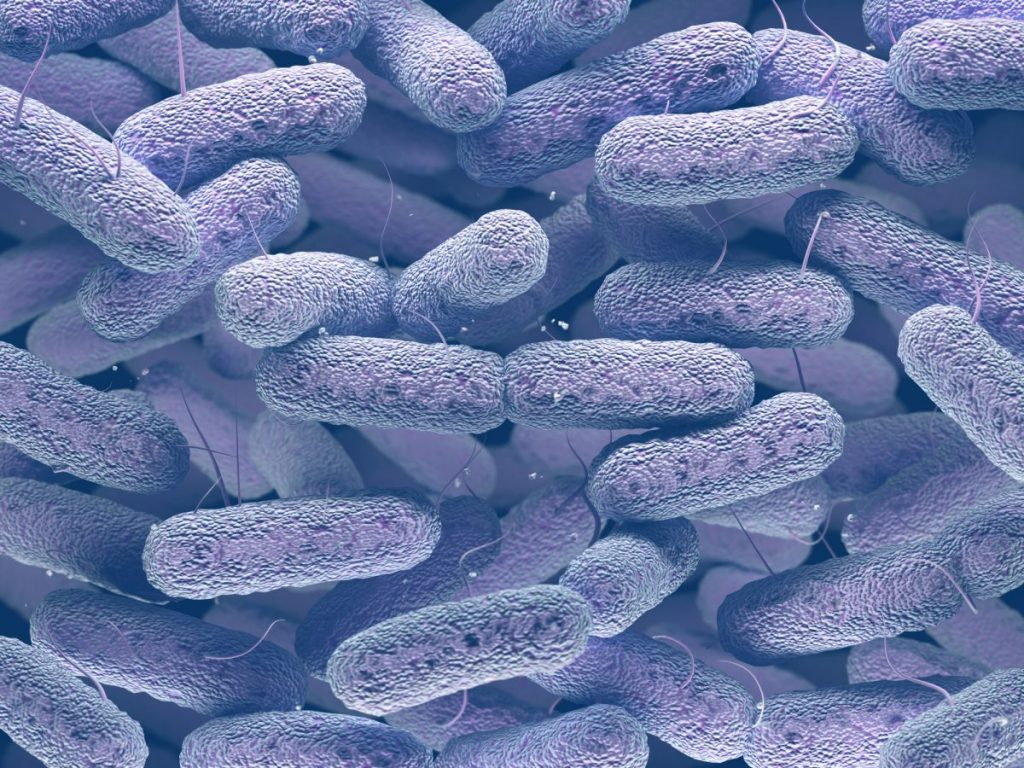 gram negative bacteria