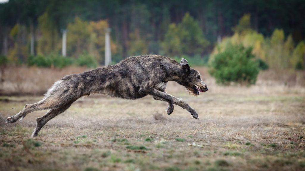 exercise gallop run