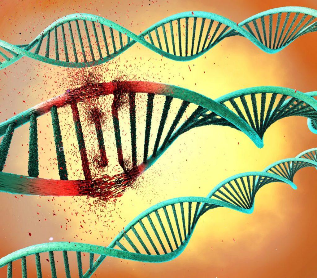 BTD gene carboxylases