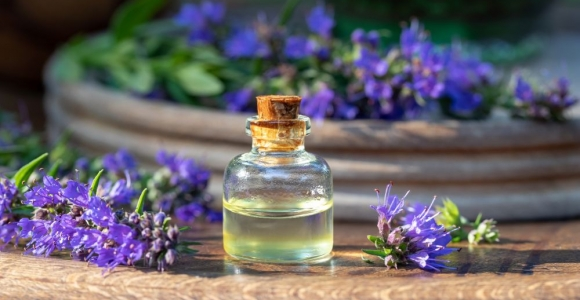 Hyssop: Food, Medicine, and Aromatherapy