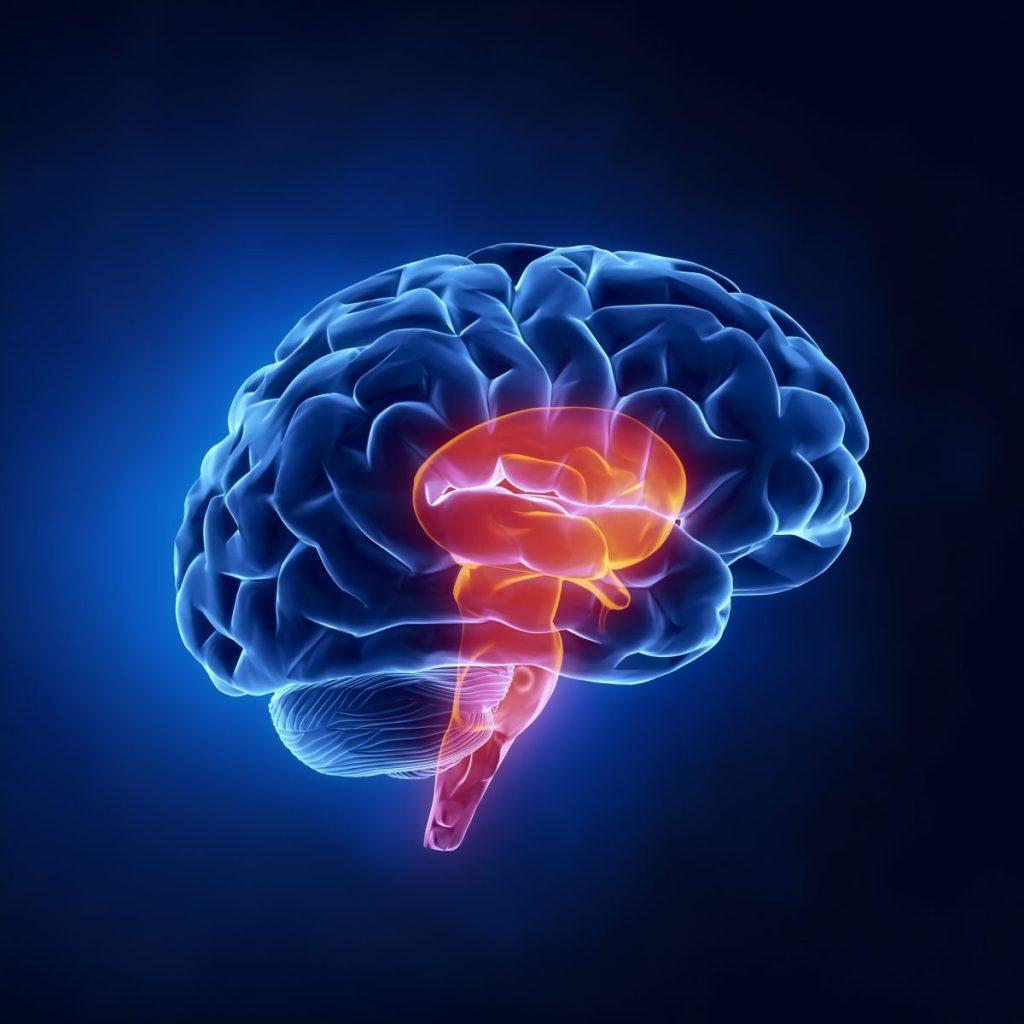 Orthostatic Intolerance ANS CNS Brainstem