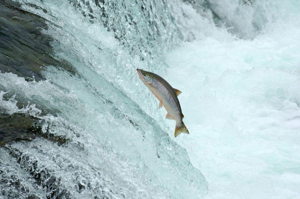 wild wild-caught fish sustainable