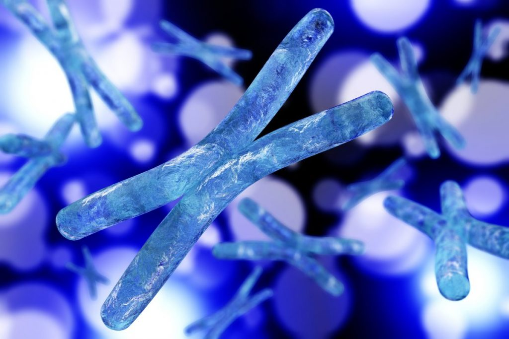 x-linked mutation alport chromosome