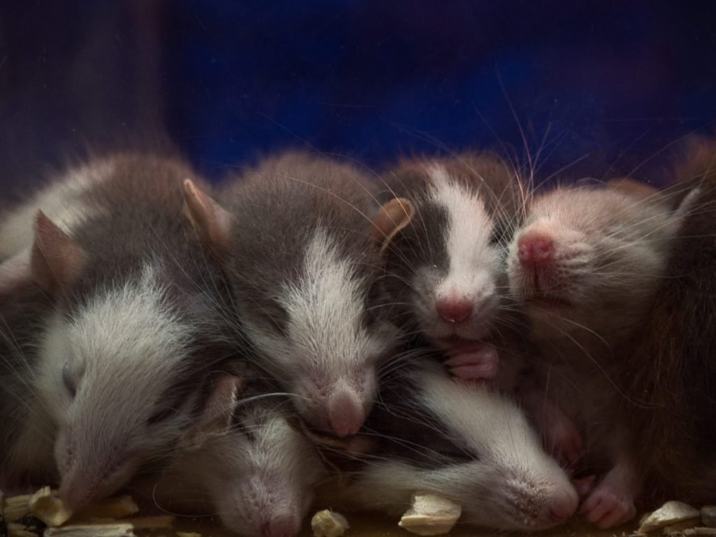 Epigenetics Acquired Traits Generations Mice