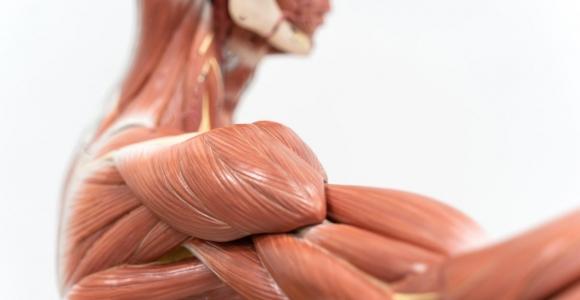 Anatomical Terminology Basics