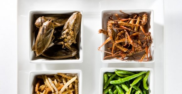 Edible Insects Belong on Your Plate