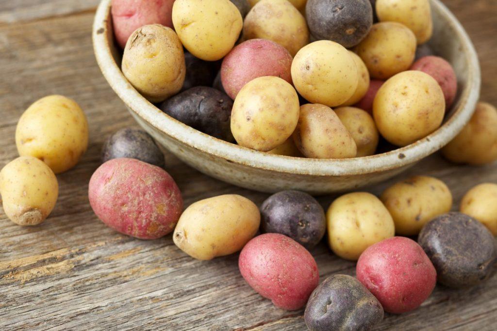 Multi-colored Small Potatoes
