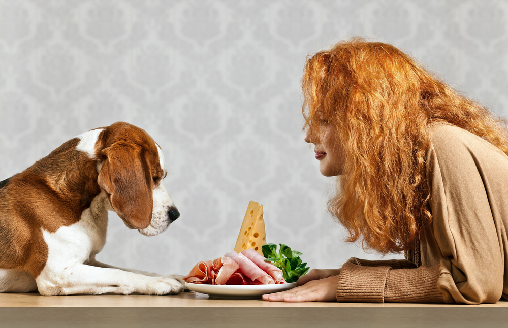 girl with cute beagle and snack on white plate