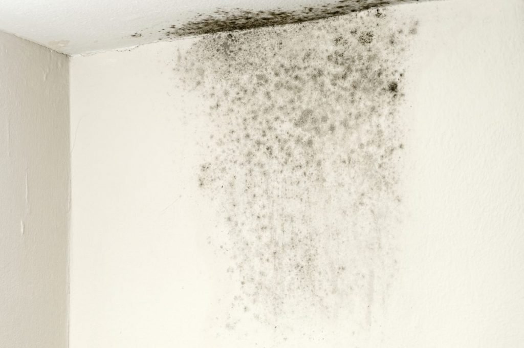 black mold wall