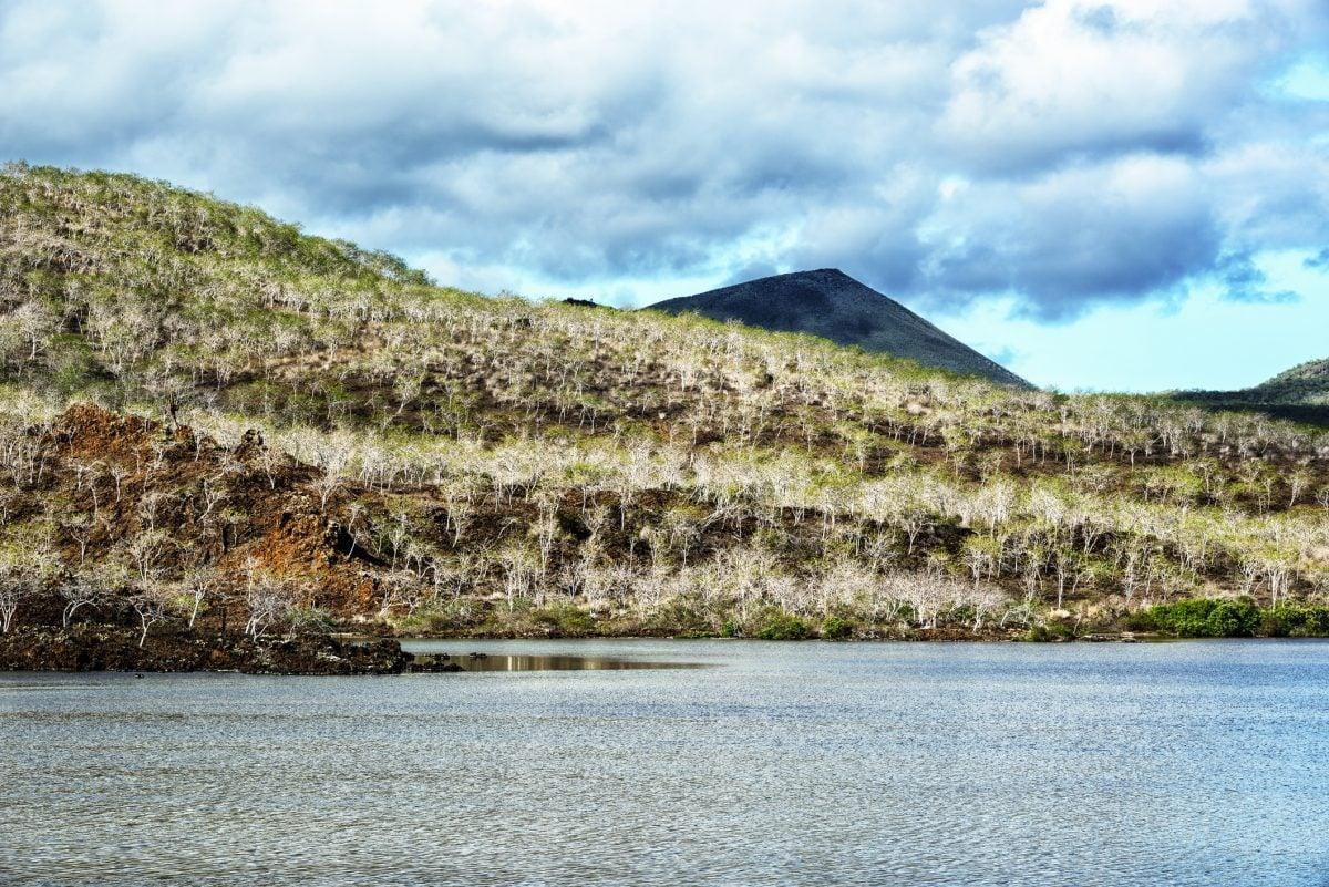 Galapagos Islands palo santo trees