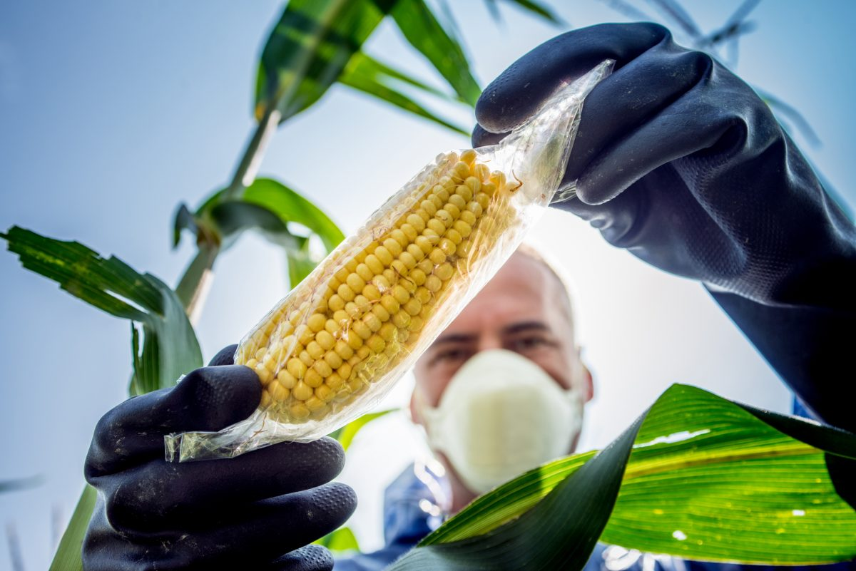 agriculture genetic seeds