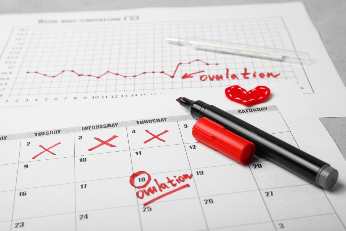 TTC ovulation pregnancy