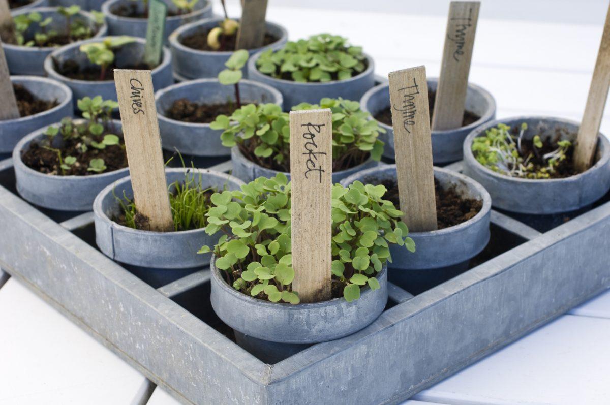 Plant a garden at home