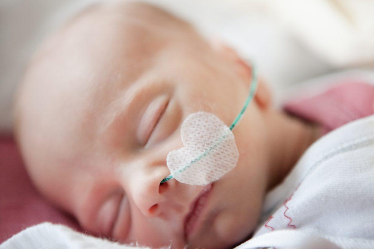 low birth weight fetus development
