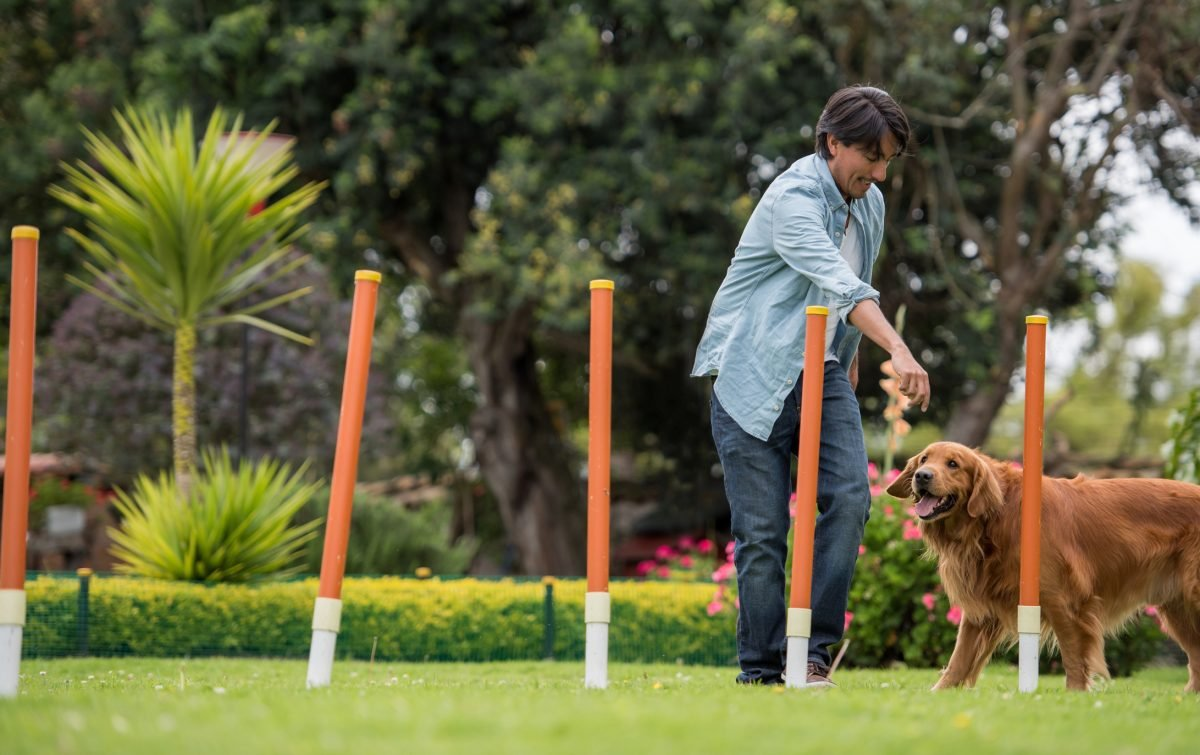 dog and owner, agility course