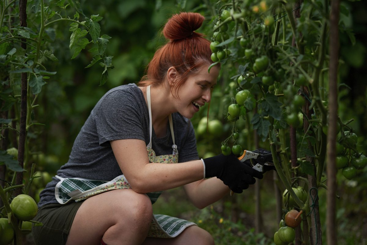woman pruning tomato leaves