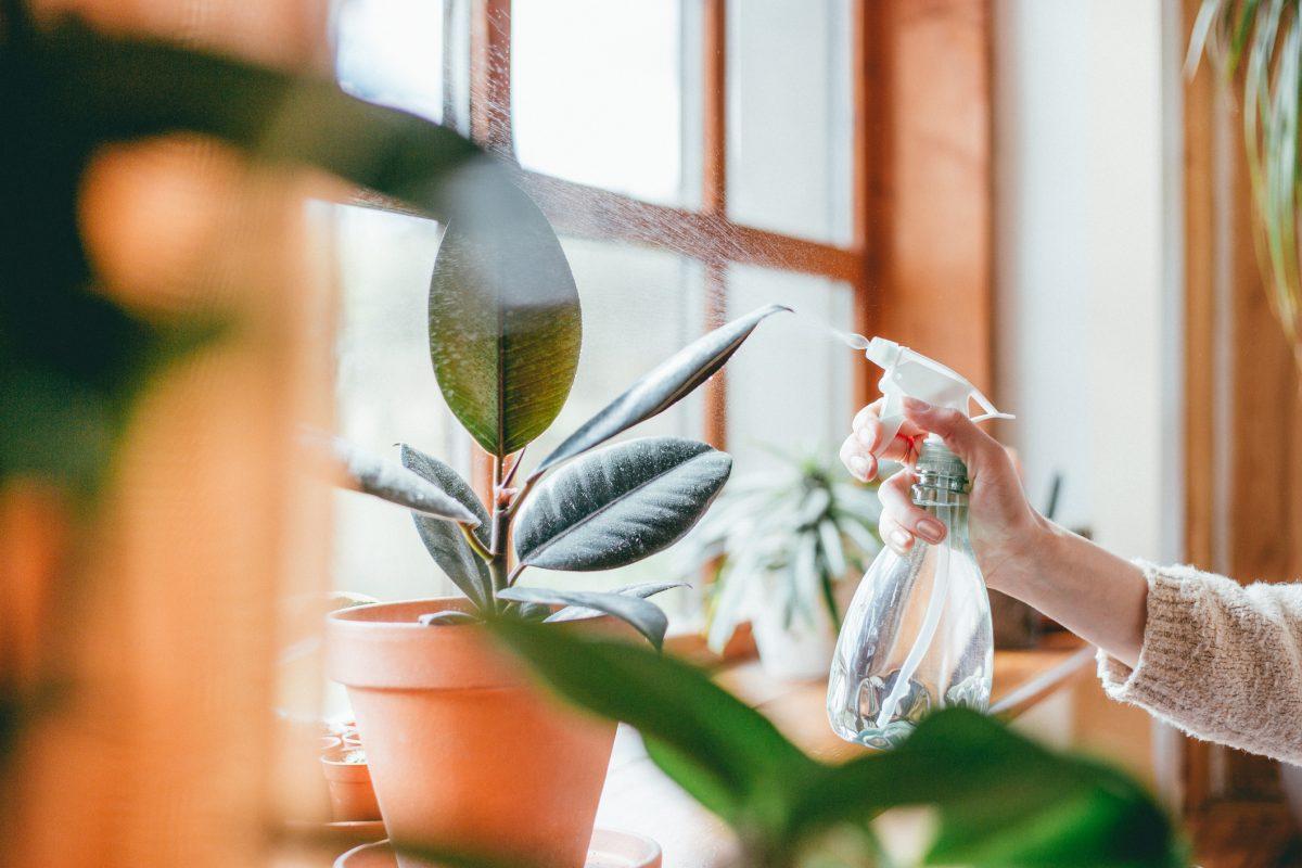 plant leaves spray bottle