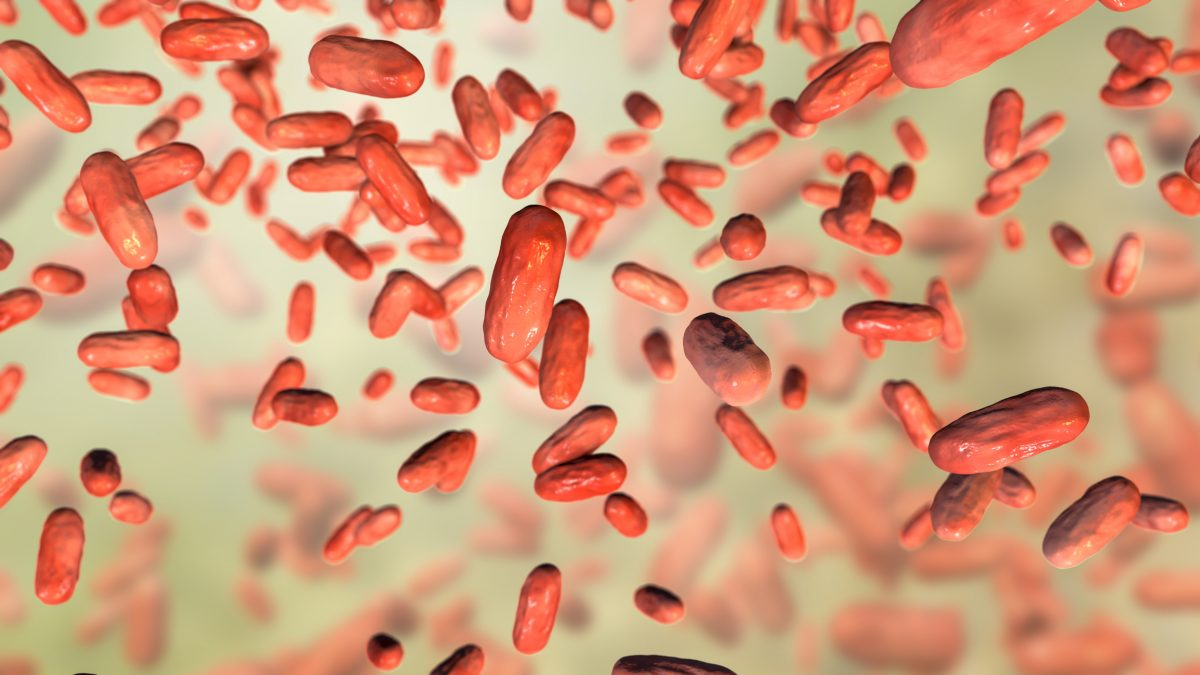 pertucinogena bacteriocin pertussis RNA binders