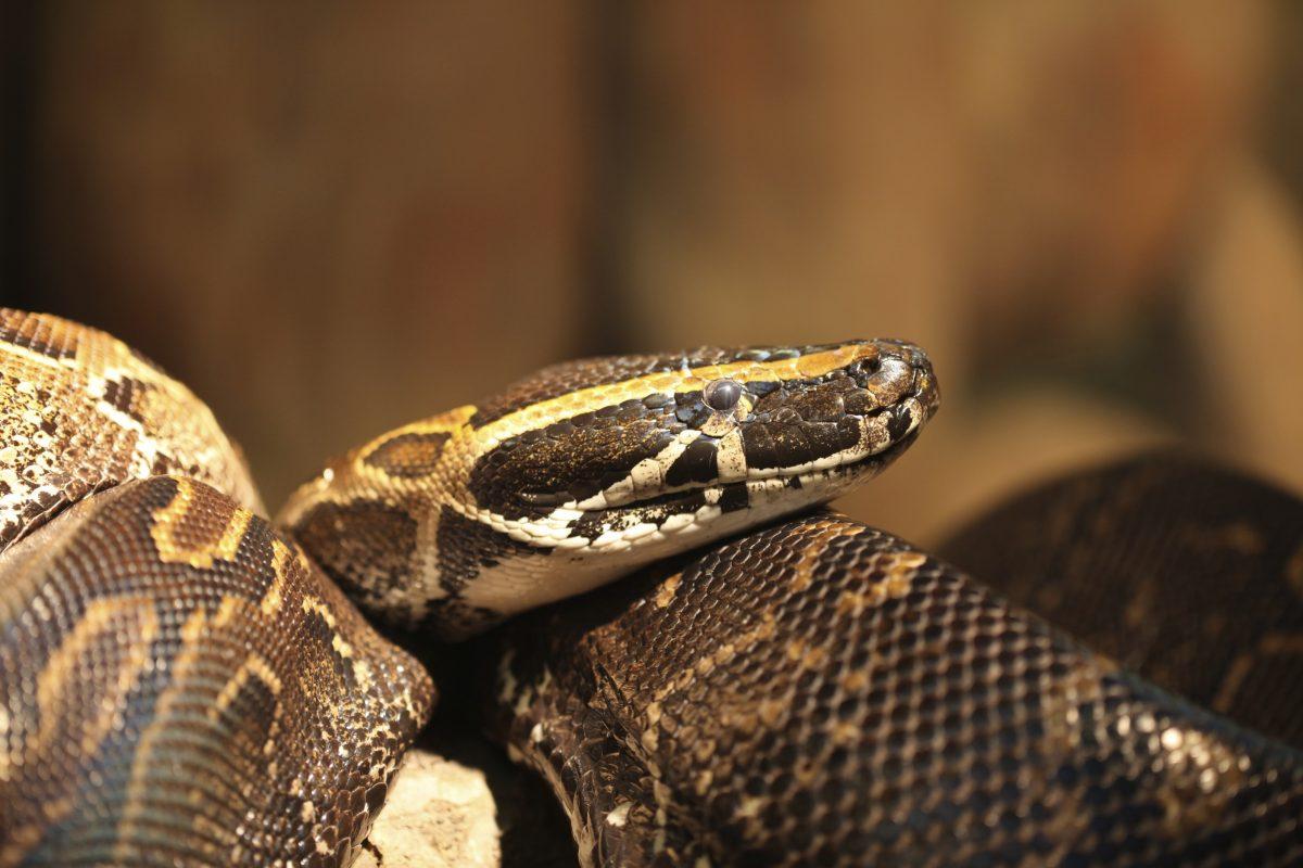 sub-saharan Africa mean snake
