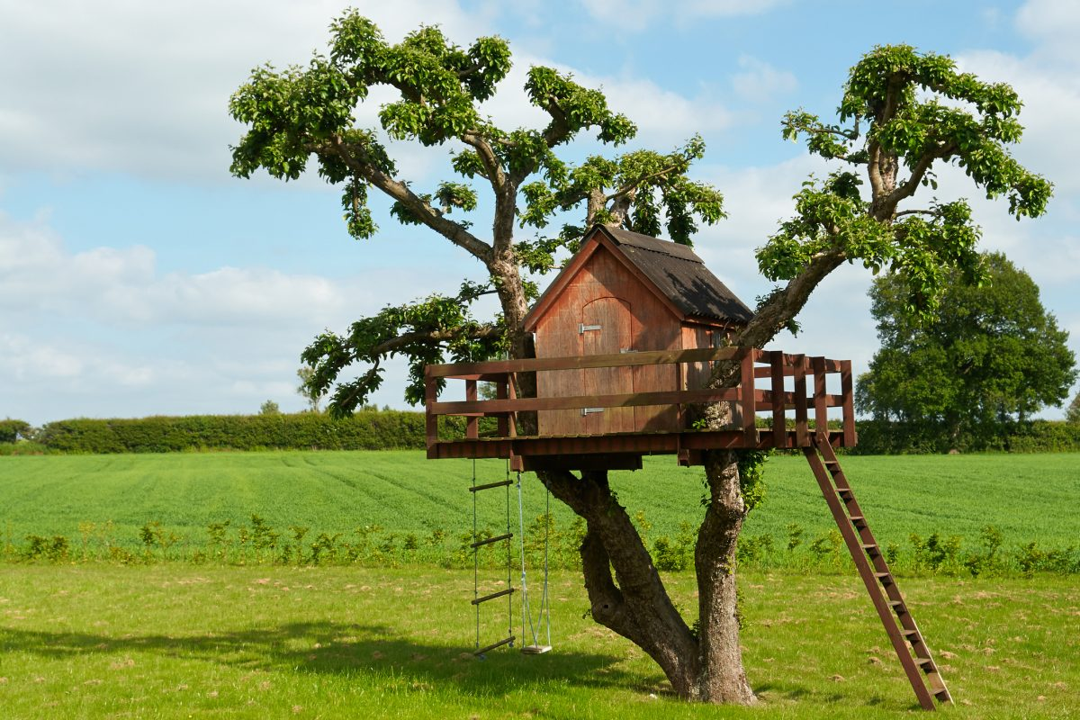 A good tree for a tree house should have more than one supporting branch.