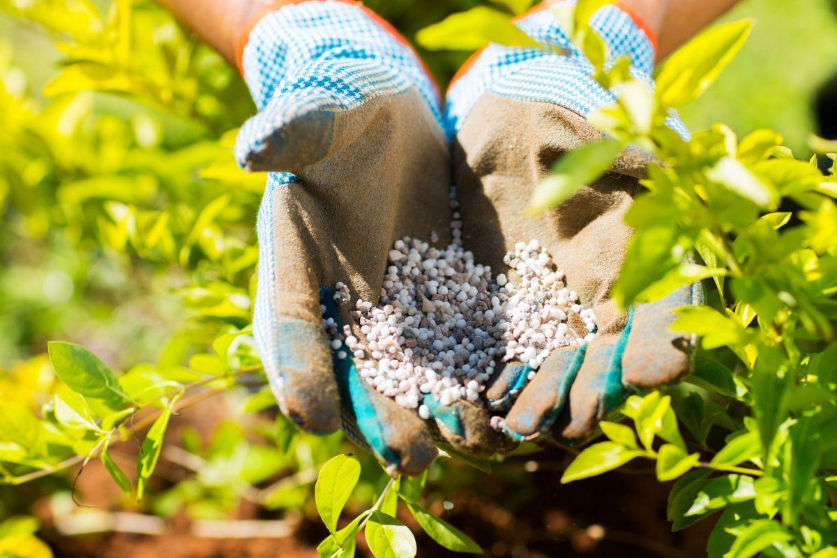 Wear gloves when handling fertilizer.