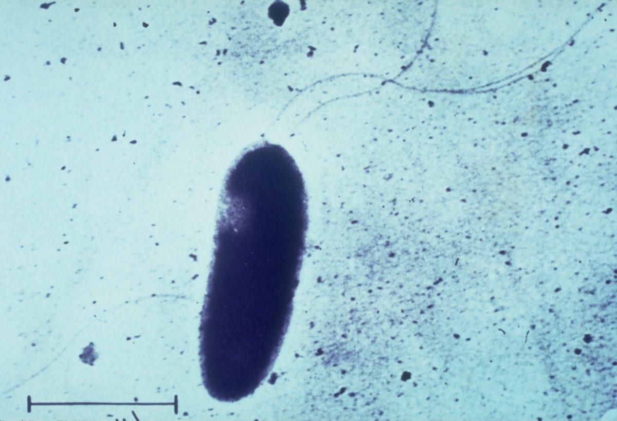 aeruginosa blood infections pneumonia
