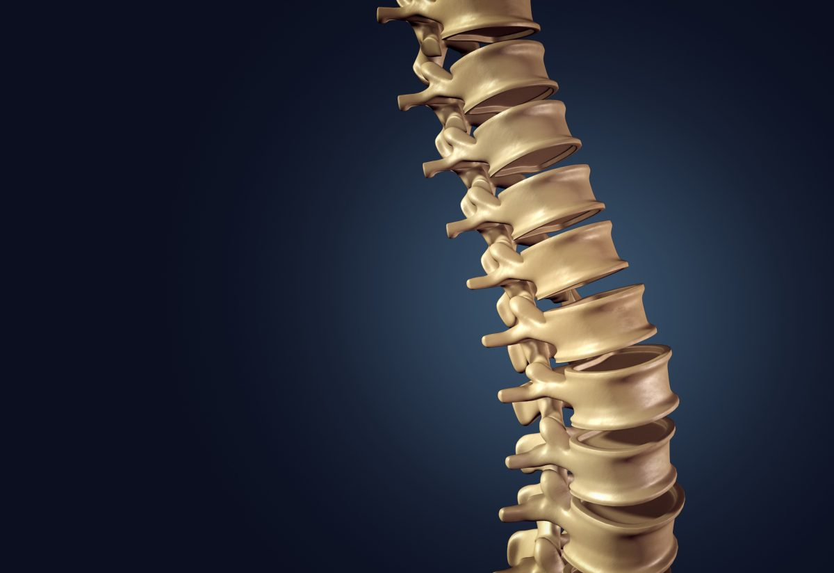spinal spine cord