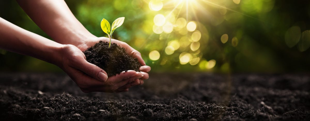 Start with the right soil for happy seedlings.