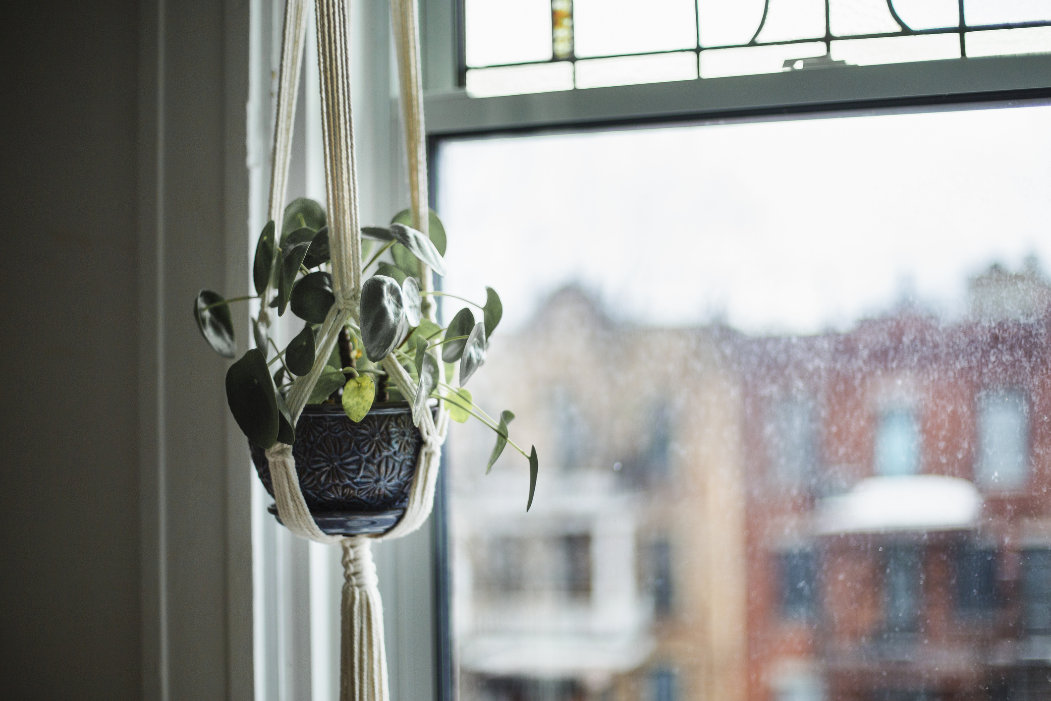 Potted plant, hanging basket, hanging, botany