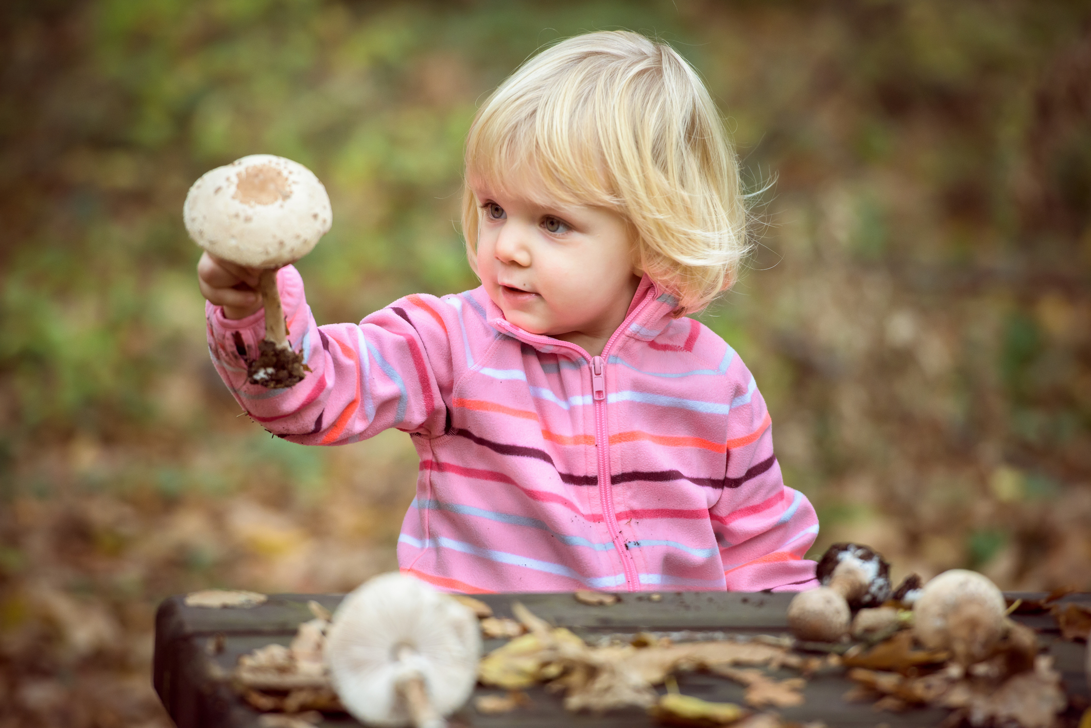 Little girl looking parasol mushrooms