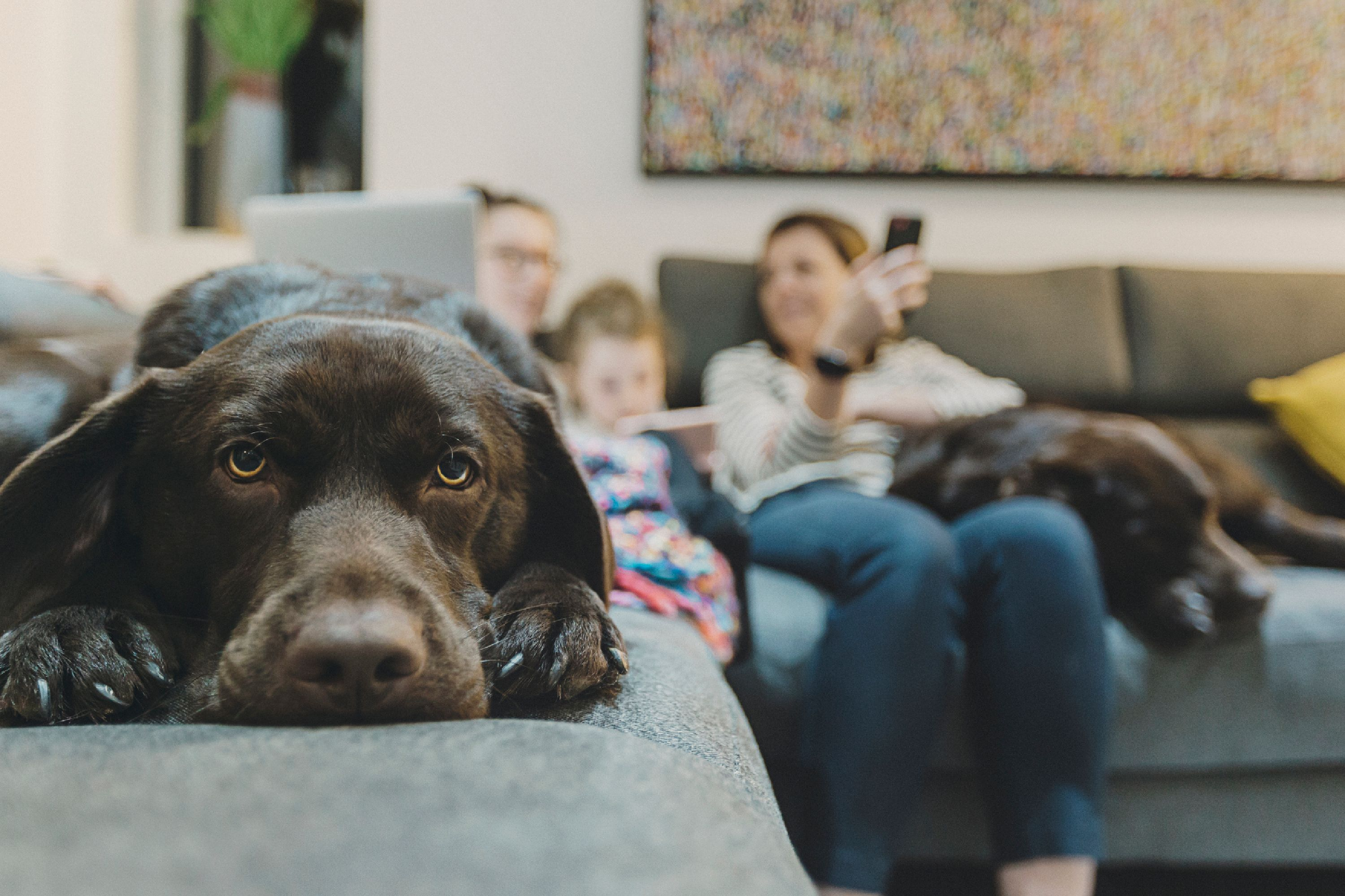 Dog on sofa with family