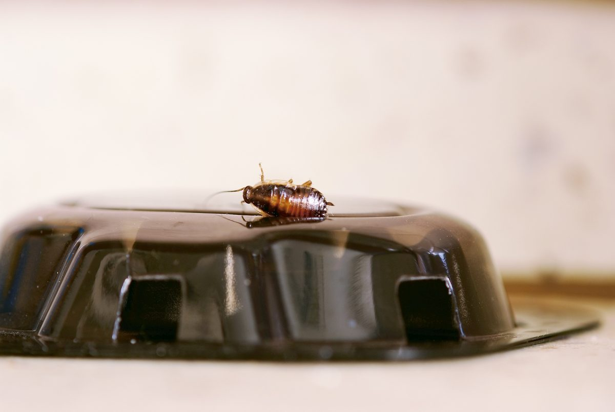 Roach baits work well