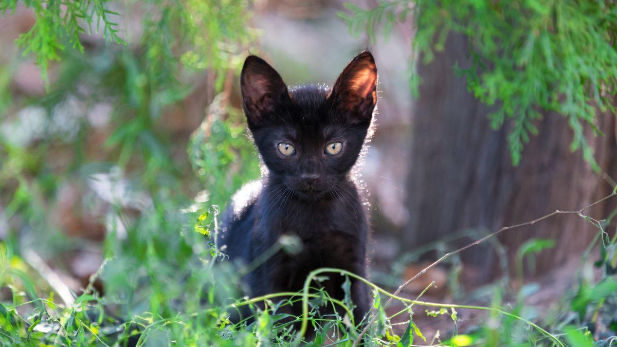 Nature-inspired black cat names