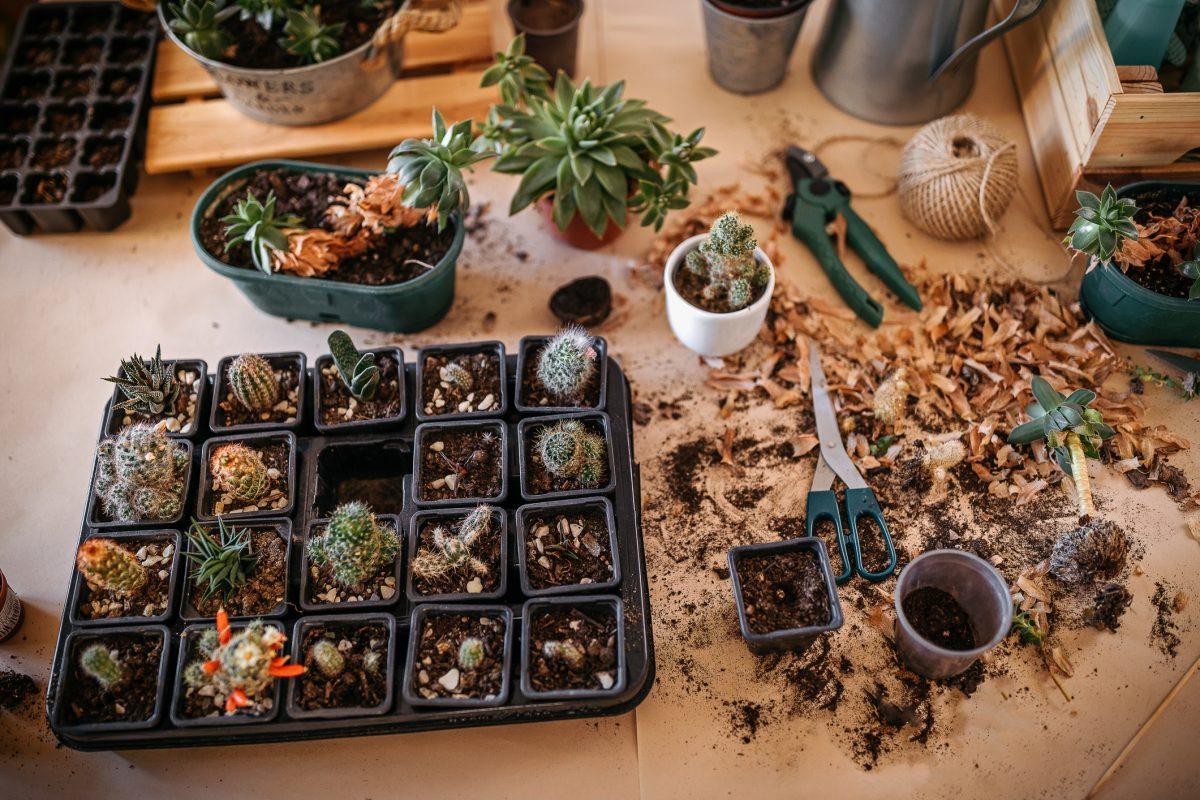 Use nursery trays in a frame