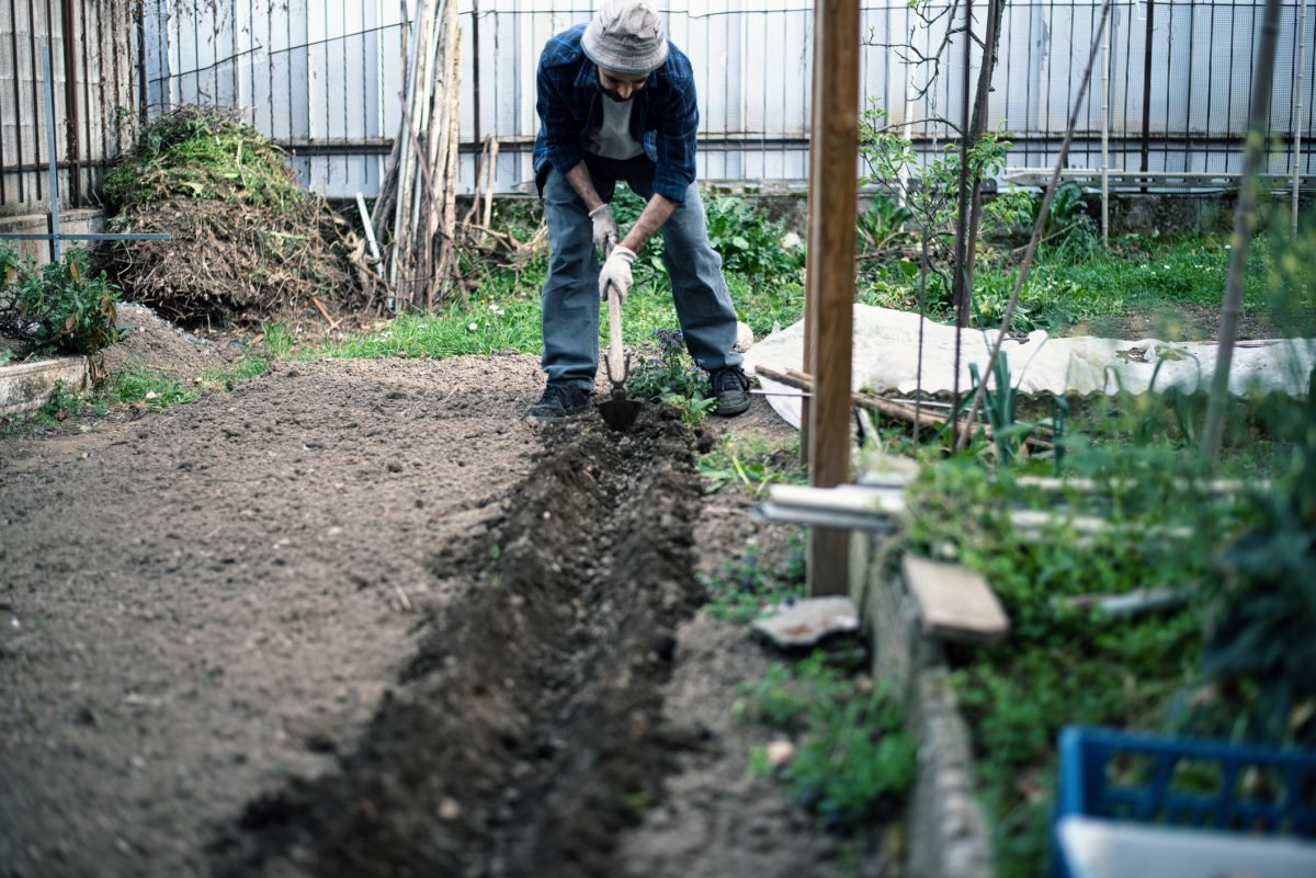 Preparing Asparagus Bed Gardening